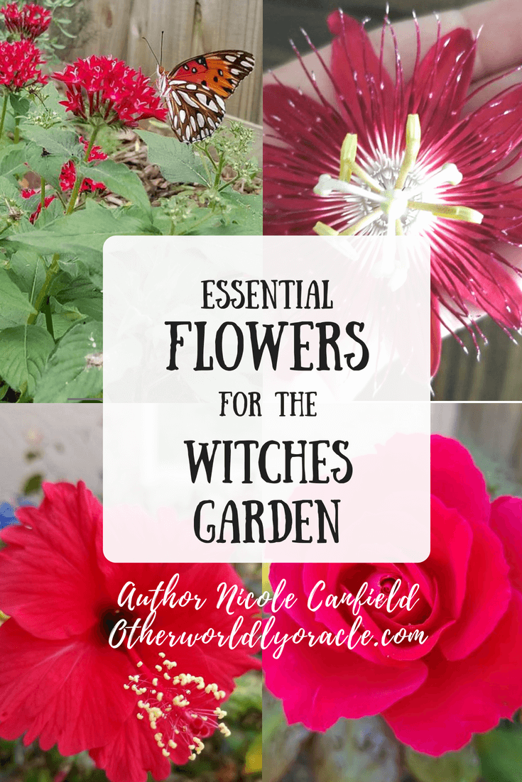 Magickal Plants Essential Flowers For The Witches Garden
