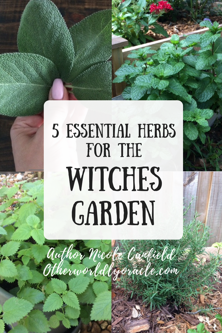 Five Essential Culinary Herbs for the Witches Garden