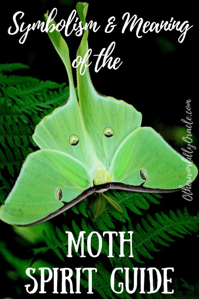 Moth Symbolism, Folklore & The Moth Spirit Guide