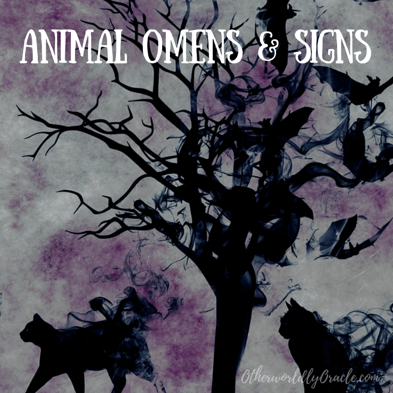 Animal Omens and Signs: Rabbits, Deer, Fox, Birds and More