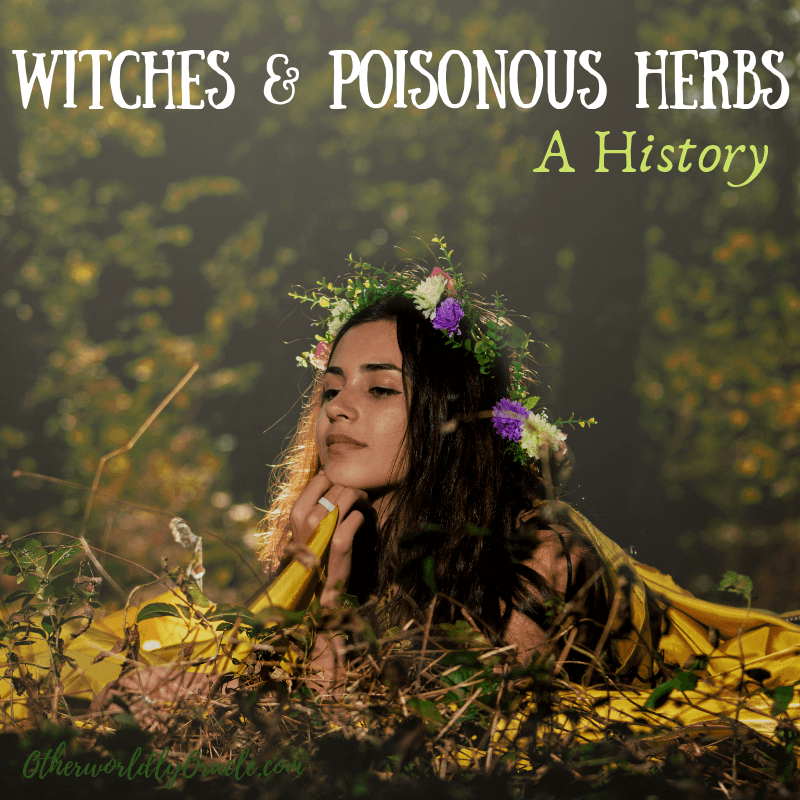 Witches and Poisonous Herbs: Bella Donna, Fly Agaric, and More